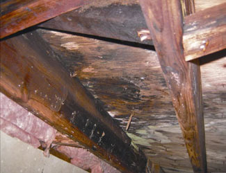 mold and rot in a Sparks crawl space