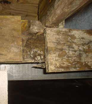 Extensive basement rot found in Sun Valley by CleanSpace