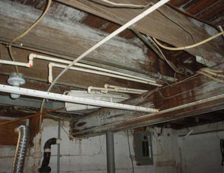 a humid basement overgrown with mold and rot in Virginia City